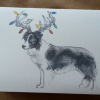 photo of holiday card with border Collie with Christmas lights